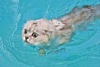 cat-in-the-pool-5